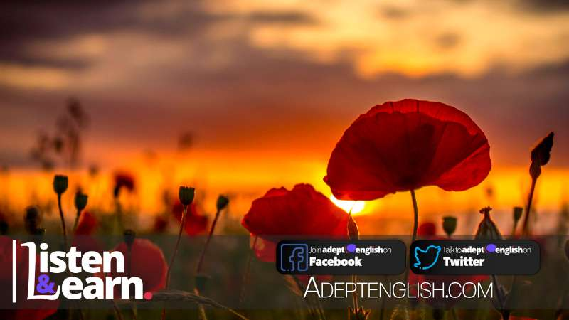 Summer poppies in Norfolk UK. Our 400th Listen and learn English language learning podcast.