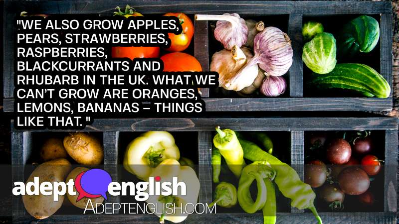 A photograph of vegetables. This English language podcast lesson is about words you might use in an English garden.