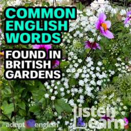 A photograph of some flowers as the 2021 Hampton Court flower show. Today we practice common English words used in the garden.