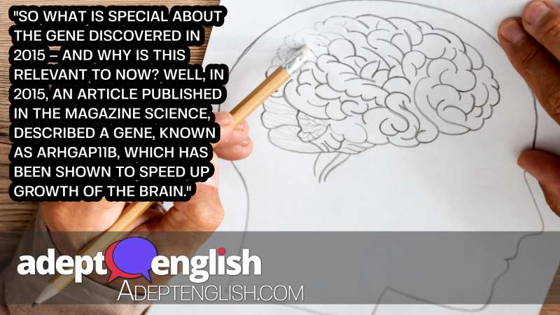A photograph of a human brain. We discuss the moral minefield of genetically modifying animals in today's conversation in English.