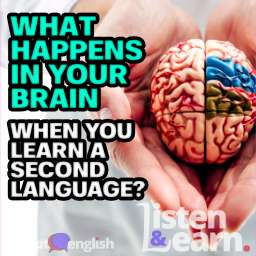 A graphic of a doctor holding model of brain in clinic, as we explain the science behind the Adept English way of learning to speak a English.