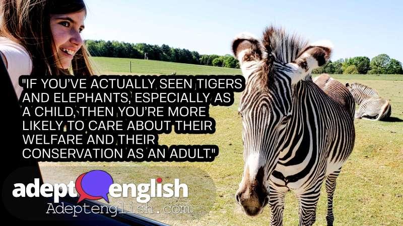 Child in drive through safari sees a zebra. An English language listening lesson about a trip to a safari park.