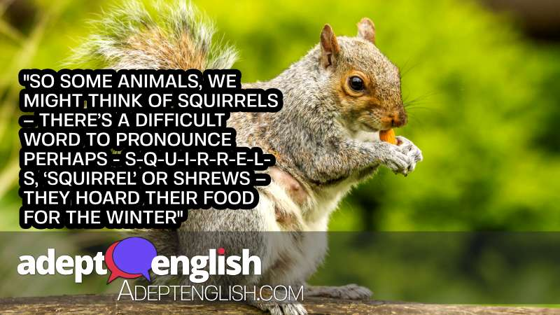 A photograph of a squirrel eating a nut. During the English lessons conversation it was mentioned that animals hoard food for winter.