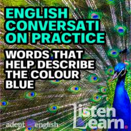 A photograph of a peacock with feathers out. As we take a deep dive on the many types of blue in todays English conversation practice.