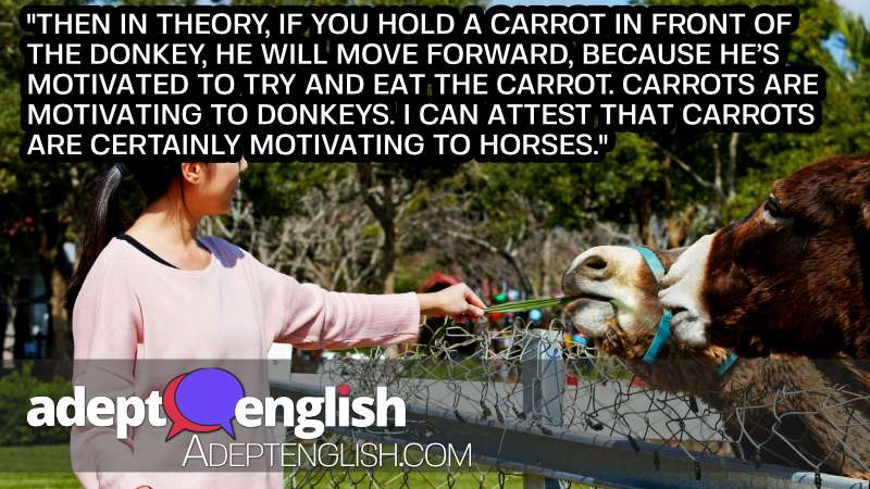A photograph of a woman feeding some donkeys, who seem to prefer the carrot over the stick when it comes to motivation in our English idioms lesson.