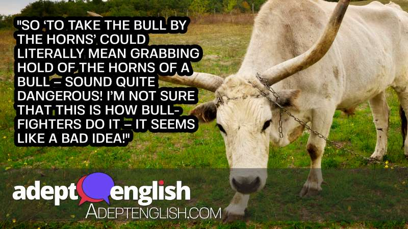 A photograph of a bull with enormous horns. This English idiom is definitely not something you want to try literally.