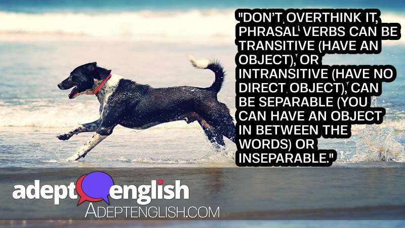 A photograph of a dog wagging it's tail at the beach. A dog features in one of today's English idioms.