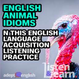 A photograph of a turkey, a really ugly bird. English idioms are the topic of today's comprehensible input English podcast lesson.