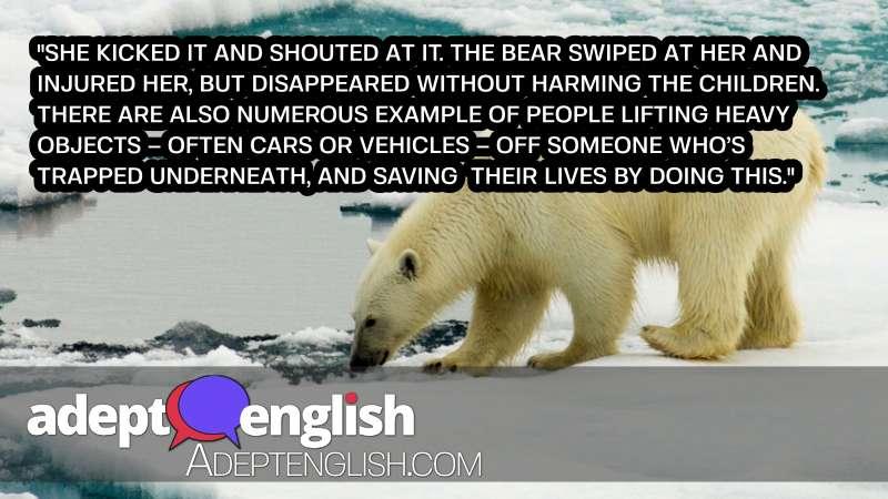 A photograph of a polar bear in the Chukchi Sea, Arctic Ocean. Interesting English listening practice.