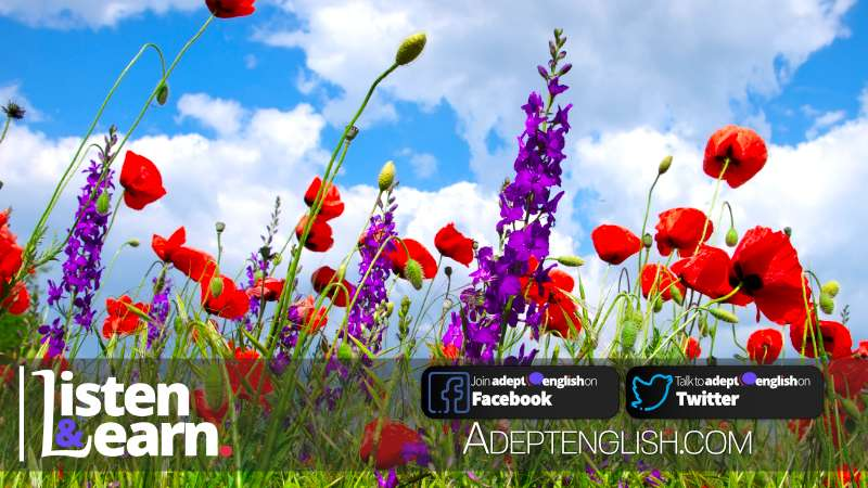 A photograph of brightly coloured wild flowers set against a deep blue sky used as the cover image for learning to speak English language
