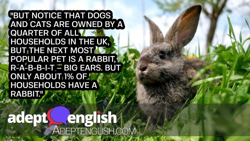 A photograph of a pet rabbit, discussed in the English lesson on British obsession with pets.