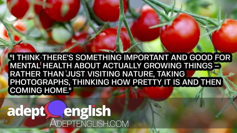 A photograph of a tomatoes on a green plant, as this speak English class talks about improving your quality of life with nature.